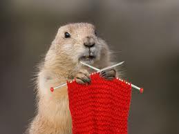 groundhog knitting